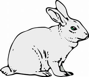 Rabbit Clipart « FrPic