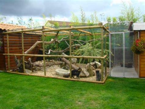 construire un enclos exterieur pour chat enclos ext 233 rieur pour chats chats forum animaux