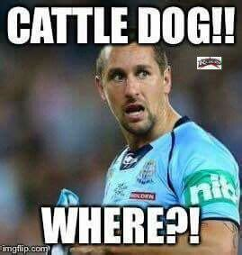 Cronulla Sharks Memes - pin by nrl queen on nrl memes pinterest nrl memes rugby league and rugby