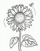 Coloring Sunflower Pages Mandala Von Flower Bee Gemerkt Malvorlagen sketch template