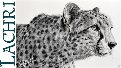 graphite cheetah speed drawing  lachri youtube