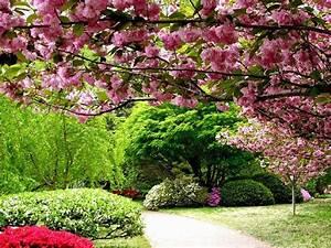 Flowers Tree Lovely Leaves Flowers Garden Vase Nature ...