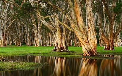 Swamp Park Australia Centennial Nature Rainy Forest