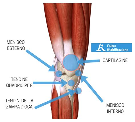 dolore ginocchio dopo o durante la corsa cosa lo - Dolori Ginocchio Interno