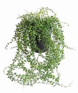 Plante Exterieur Artificielle : plante artificielle callisia en pot interieur exterieur h 70 cm vert ~ Teatrodelosmanantiales.com Idées de Décoration