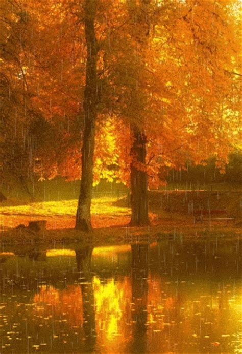 wedding quotes rainy day autumn pictures photos and images for