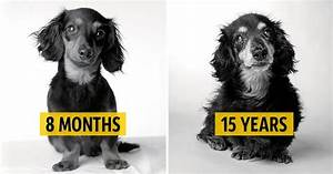 how dogs older a fascinating and deeply touching photography project