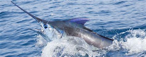 Head Boat Deep Sea Fishing Carolina Beach Nc by Hunter Sport Fishing Deep Sea Fishing Charter