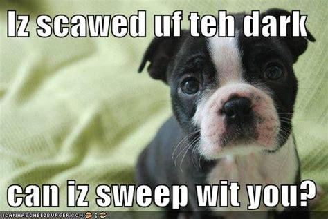 Boston Terrier Meme - slideshow boston terrier memes sure to make you smile ibostonterrier com ibostonterrier com