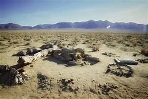 The Actual U2 The Joshua Tree Died In 2000