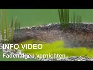 Fadenalgen Im Gartenteich : fadenalgenvernichter video fadenalgen bek mpfen und ~ A.2002-acura-tl-radio.info Haus und Dekorationen