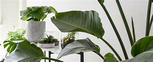 4, Indoor, Plants, Suited, For, Every, Home