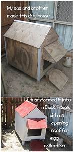 a pallet dog house