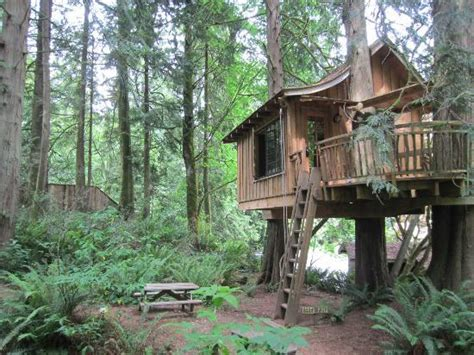 Upper Pond-picture Of Treehouse Point, Issaquah