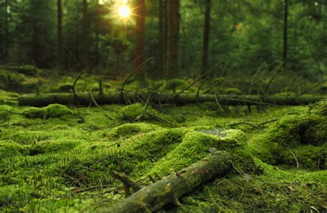 daily wallpaper mossy forest    waste  time