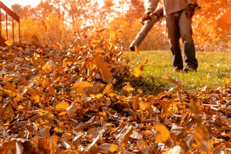 Top 5 Most Powerful Leaf Blowers That Won't Break The Bank