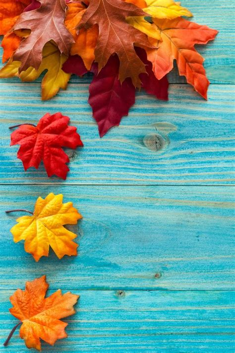 Fall Wallpaper For Iphone 7 Plus by Autumn Leaves Nature Iphone Wallpapers Mobile9 Iphone