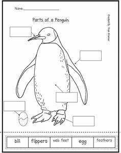 Kindergarten Crayons  Here Are Some Penguin Activities For Teachers