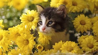 Cat Wallpapers Cats Kitten Kittens Kitty Call