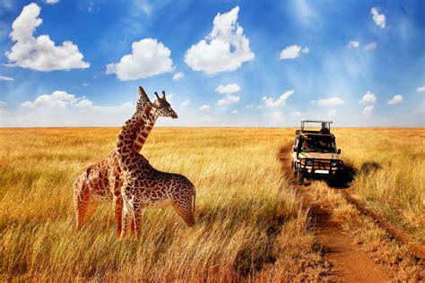 East Africa: Luxury African Safari - The Travel Divas