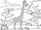 Giraffe Coloring Pages Preschool sketch template