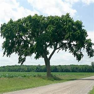 the 25 best elm tree ideas on pinterest elm tree bark With what kind of paint to use on kitchen cabinets for metal wall art trees and leaves