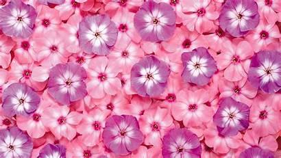 Pink Background Wallpapers Definition Backgrounds Desktop Flower