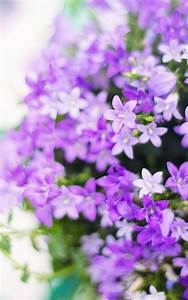 Purple, Flower, Backgrounds, 60, Pictures