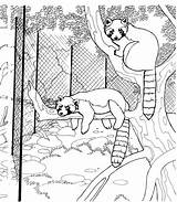 Raccoon Coloring Pages Animals Raccoons Tree Wildlife Hanging Zoo Racoons sketch template