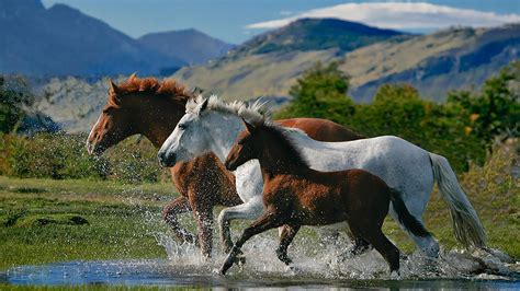 horses google apps play horse mustang wallpapers android wild background there