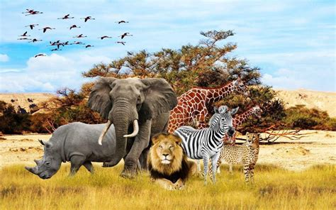 Safari Animals Wallpaper - photography id 34556 tierbabys tierkinder wallpapers