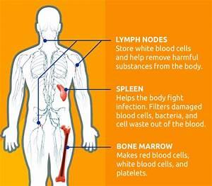 Chronic Lymphocytic Leukemia Symptoms
