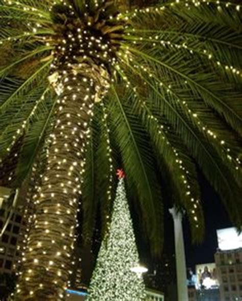 houses with christmas tree lites in palm springs palm trees on 40 pins