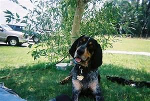 precision k 9 dog training boise idaho With precision dog training