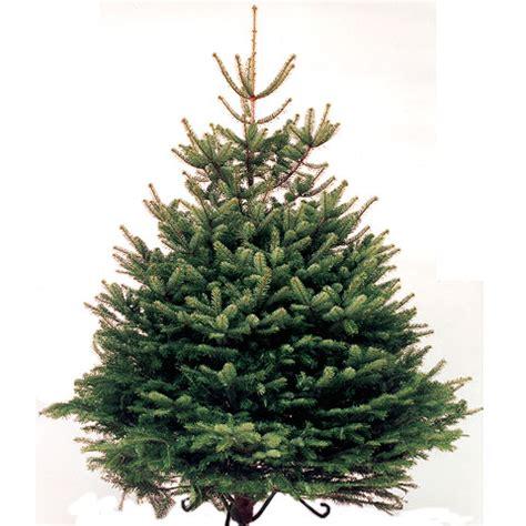 christmas trees chorlton nursery