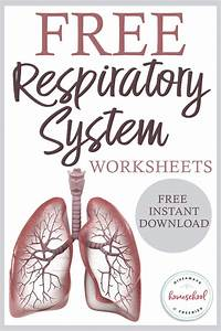 Free Respiratory System Worksheets With Instant Download