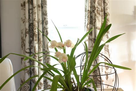 orchids rebloom another reblooming orchid the gardener s cottage