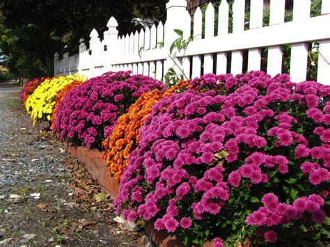 J&M Home and Garden: Mums and Pumpkins and Corn Stalks Oh My!