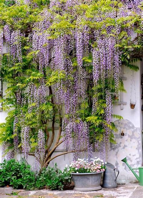 Der Garten Der Pfade Die Sich Verzweigen by Sehen Sie Sich Die Sch 246 Nsten Bilder G 228 Rten An Bei