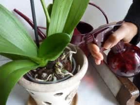 orchid 233 e phalaenopsis trucs et astuces