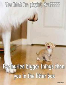 Funny animals with funny sayings | funny animals ...
