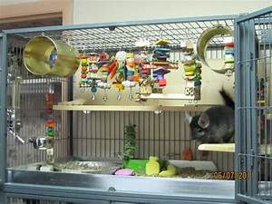 19 best images about chinchilla stuff on Pinterest ...