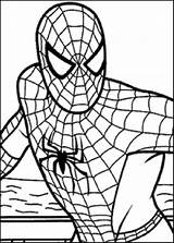 Spiderman Line Coloring Spiders Clipartmag sketch template