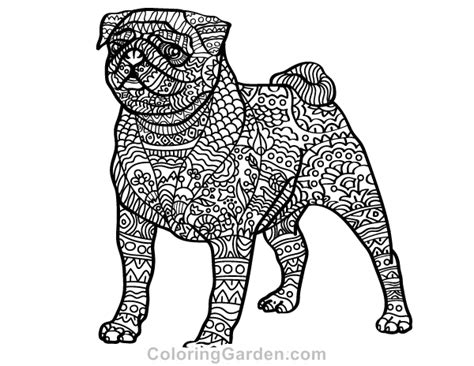 Pug Adult Coloring Page