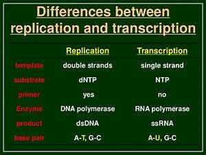 transcription in eukaryotes With difference between template and coding strand