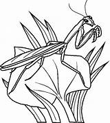 Coloring Bugs Bunny Bug Printable Insects sketch template