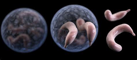 parasites cryptosporidium    crypto