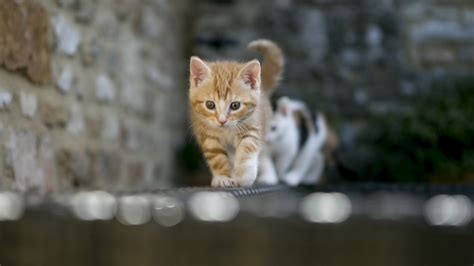 hd cat wallpapers   images