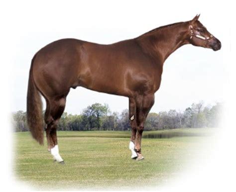 Pferd Braucht Mehr Power
