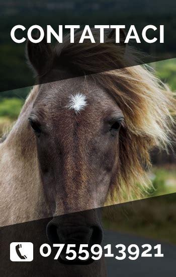 dati cavalli contatti trasporto cavalli in e all estero thast horses